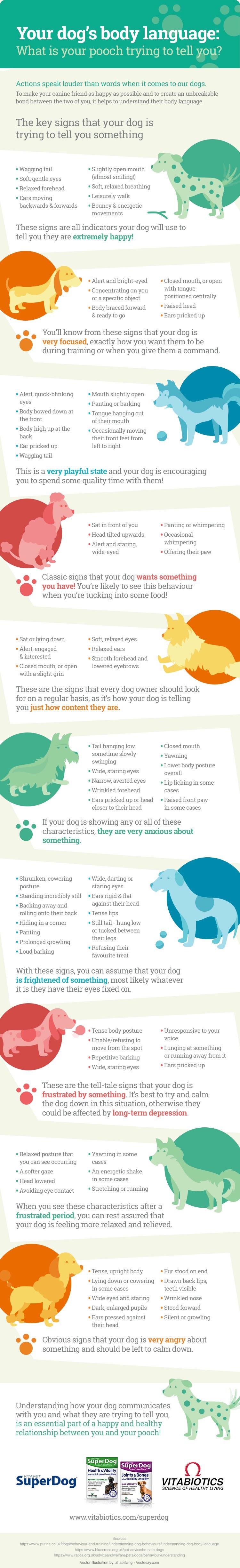Vitabiotics Dog Body Language Infographic