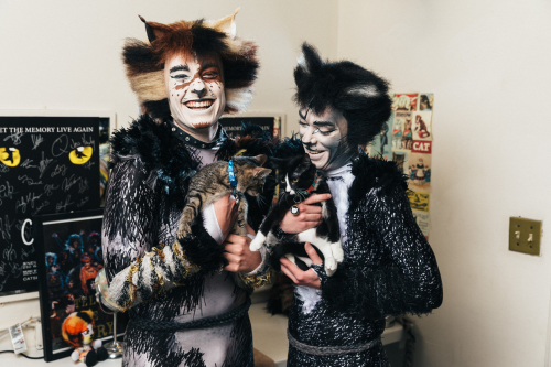 CATS with Cats Emilio MK_13