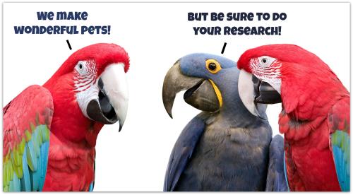 Parrot gals