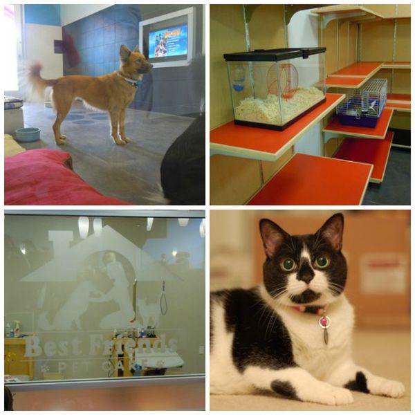 Walt Disney World Pet Care Best Of Both Worlds The Pet Blog Lady Celebrating Our Pets