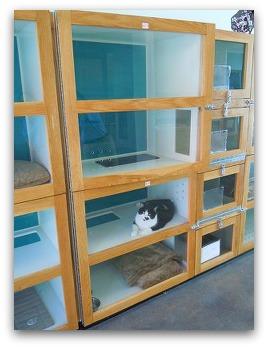 WDW Pet Care Cat Suites (2)