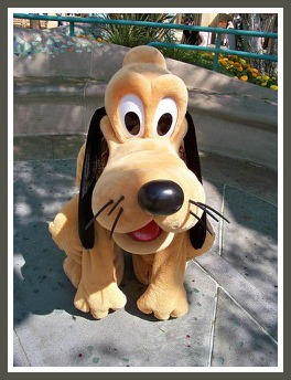 WDW Pet Care Special Guest Pluto (2)