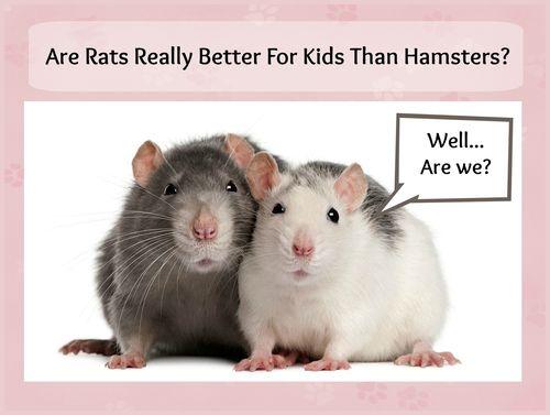 Rat banner