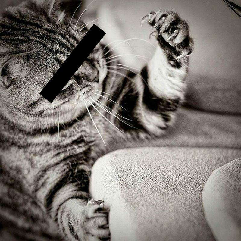 Cat scratch1anony