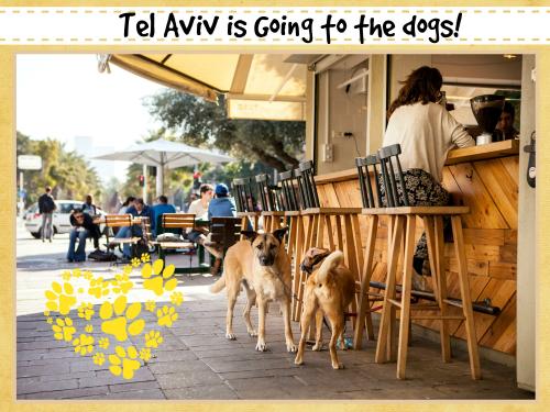 Tel aviv banner