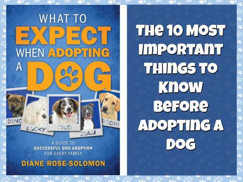 Adopt a dog header