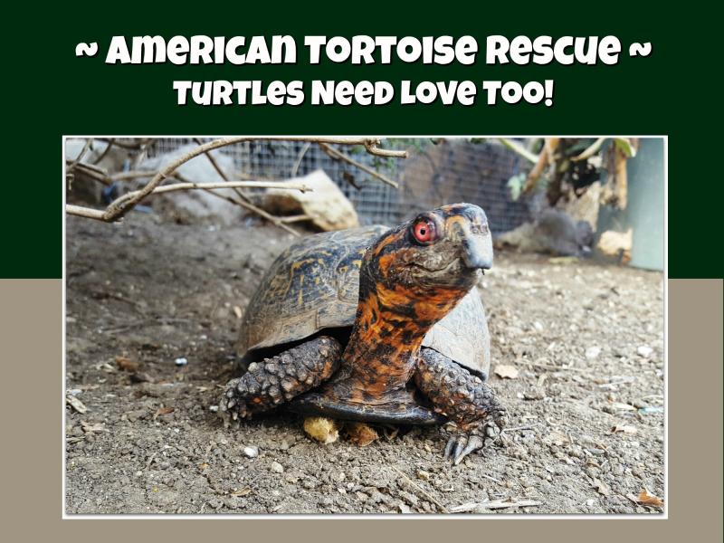 Turtle header
