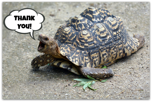 Bigstock-turtle thank you