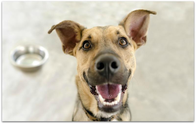 Bigstock-borderHappy-Dog-Bowl-97654535