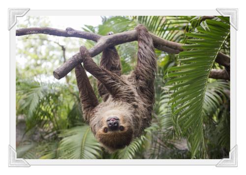 Bigstock sloth--142437545