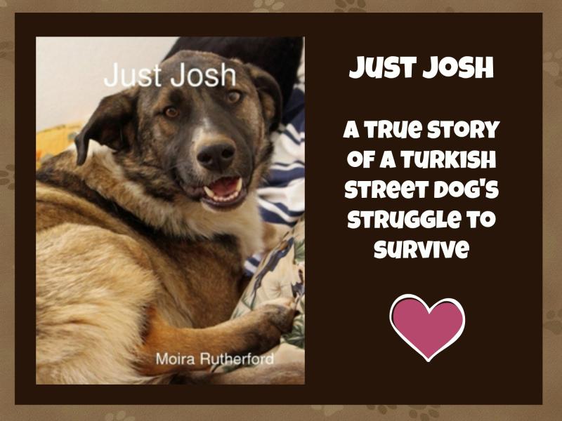 Just josh header