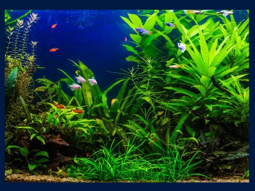 Plant header