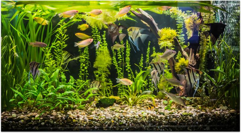 Plants varies