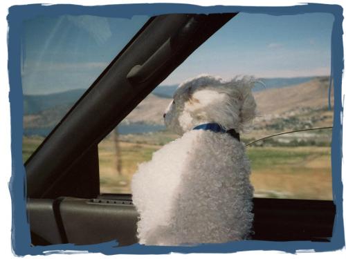 Oscar in the car