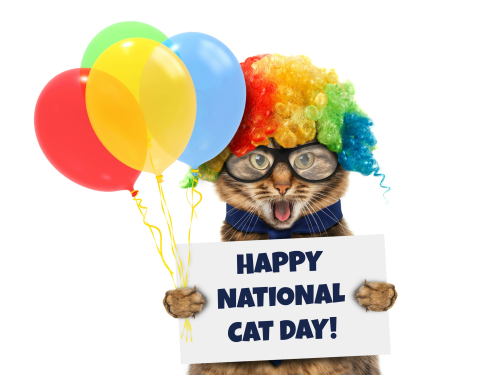NATIONAL CAT DAY!