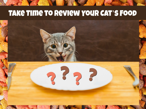 Cat review cover