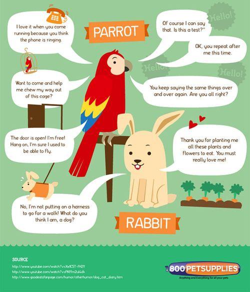 Parrotandrabbit