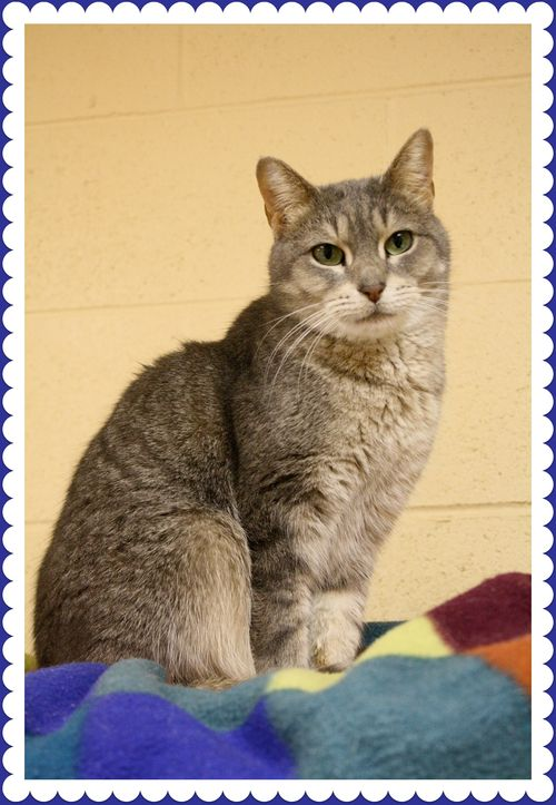 Trupanion_Cat (2)