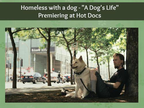Dogslifebanner