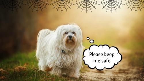 Dog for halloween