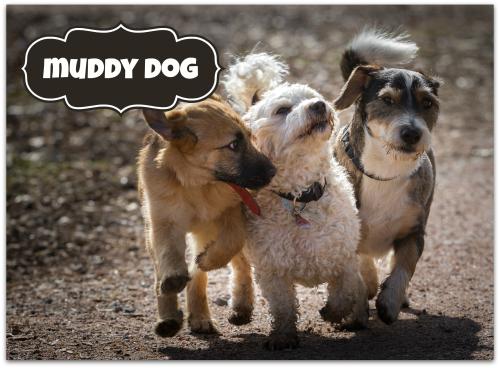 Petcraft muddy