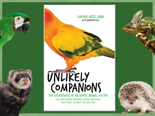 Friends Unlikely Header Womencom Unlikely Companions The Adventures Of An Exotic Animal Doctor The