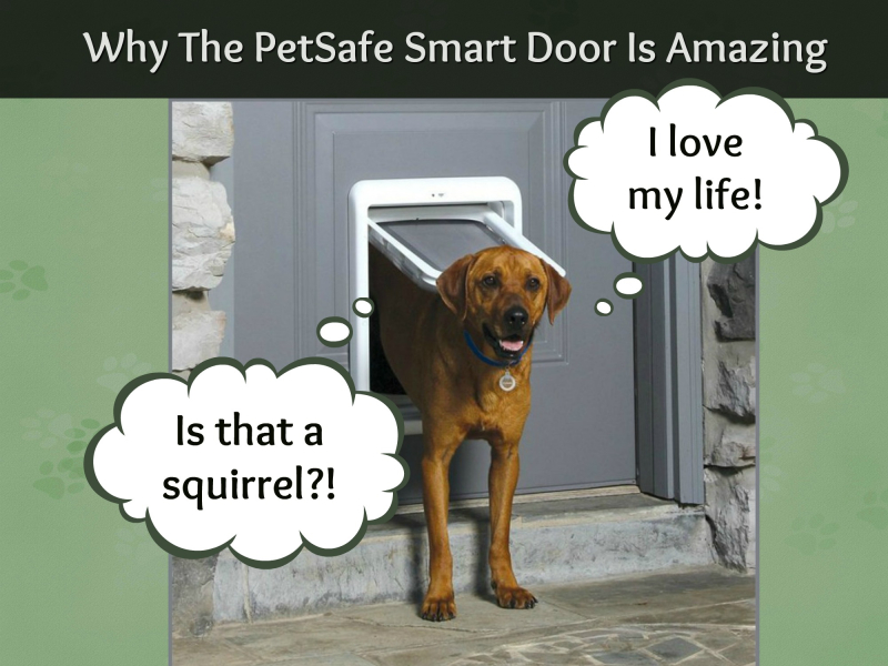 PetSafe header