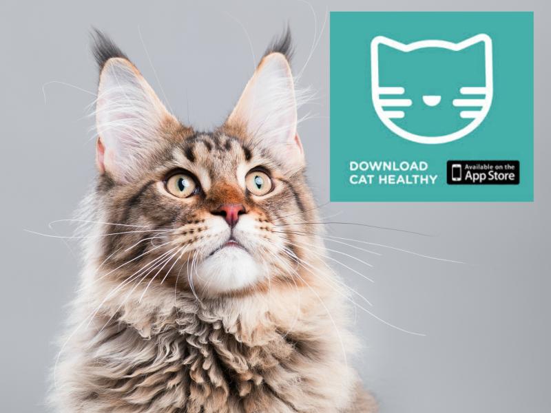 Cat healthy app