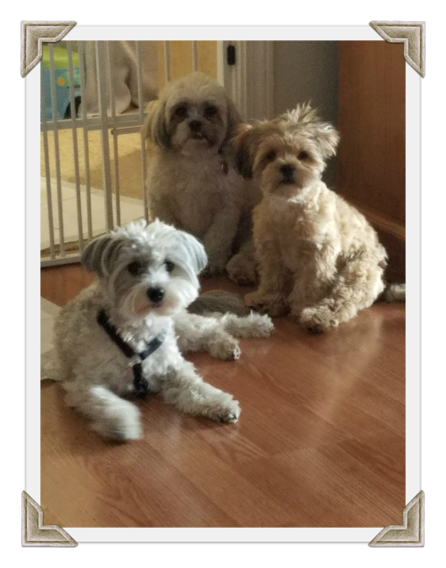 Our3doggies (1)