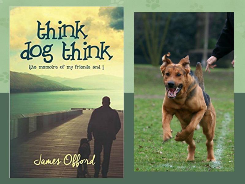 Think dog think header
