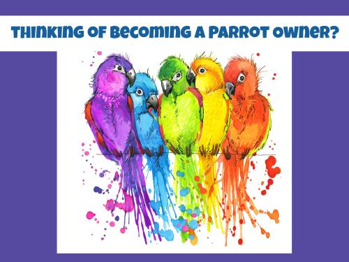 Parrot header