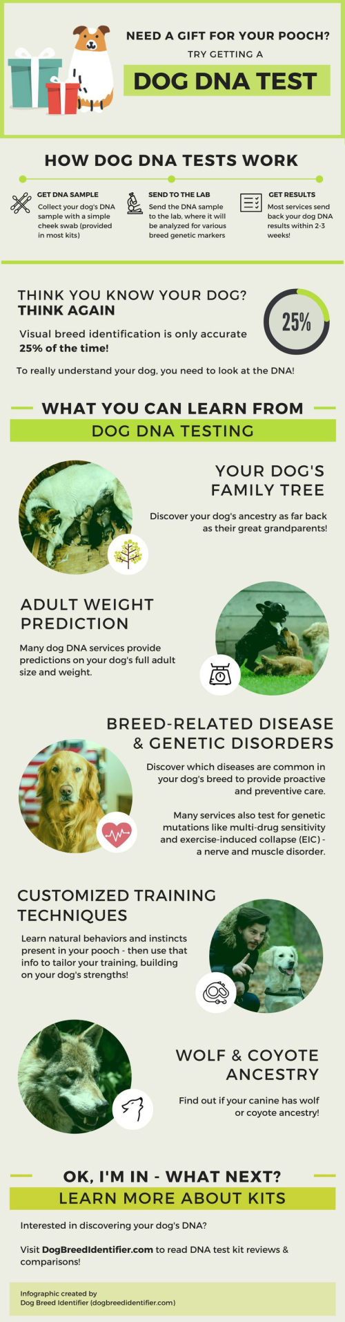 DogBreedDNA-Infographic-Full (1)