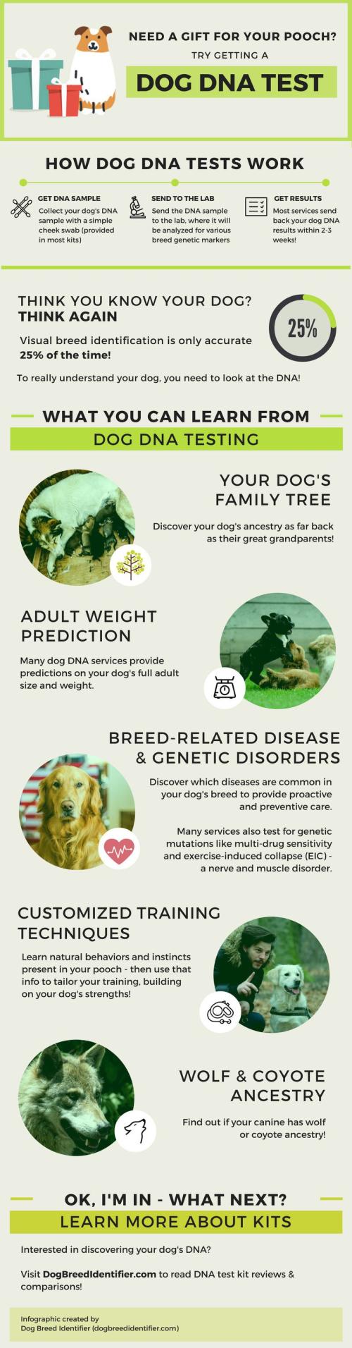DogBreedDNA-Infographic-Full (1)