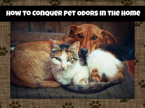 Pet odors header