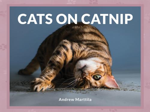 Cats header