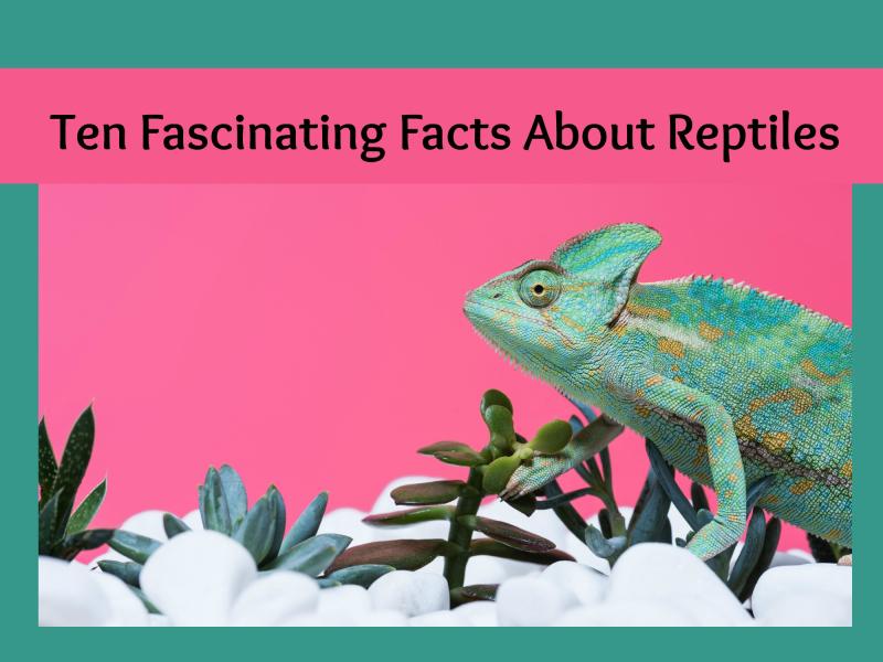 Reptile header