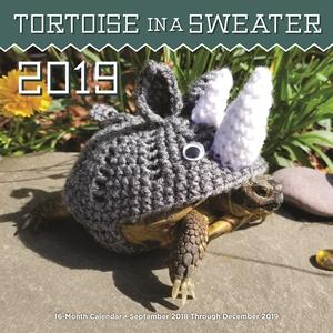Tortoise calendar