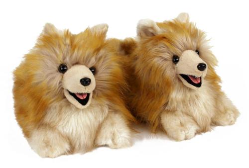 Pomeranian-1-lg