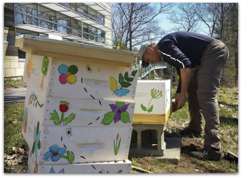 BEESpringtime hive maintenance. Fewer hives are better in an urban environment.