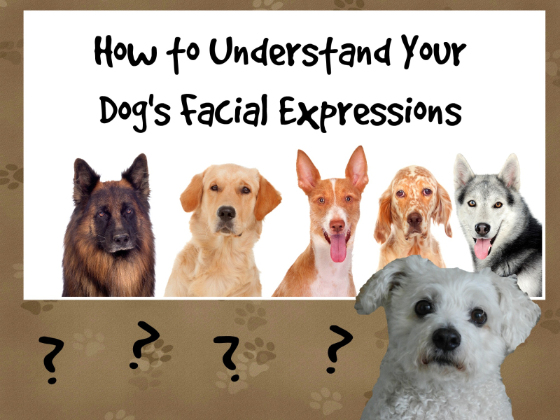 Dog expressions (1)
