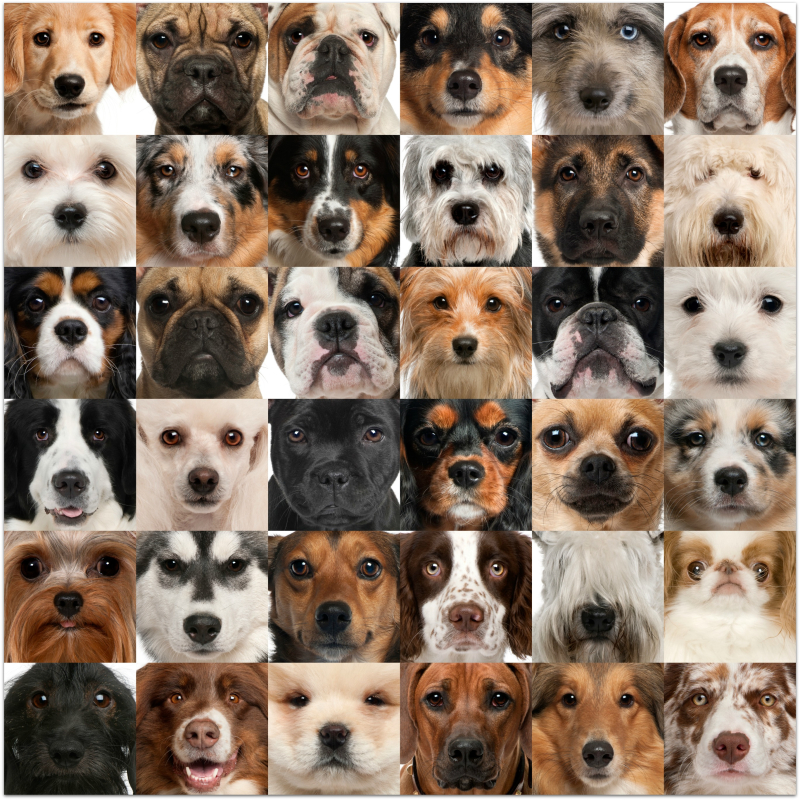 Dog faces
