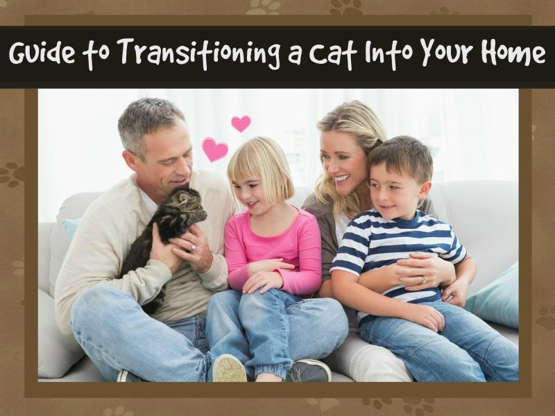 Cat guide header (1)