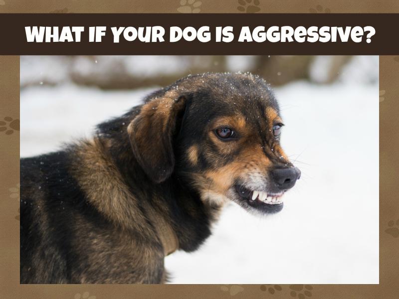 Aggressivedogcover