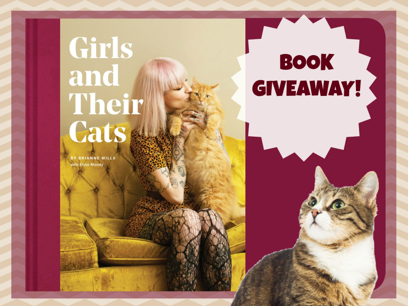 Girl cat headers