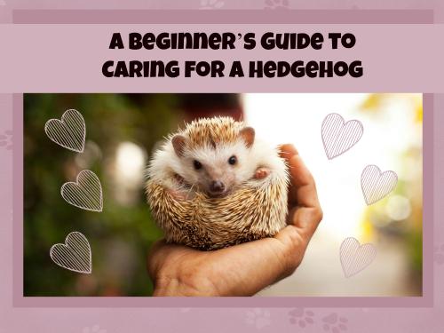 Hedgehog header