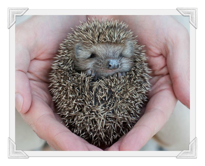 Hedgehogcorner