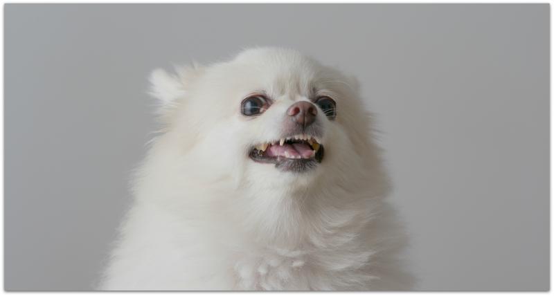 Agg dog3
