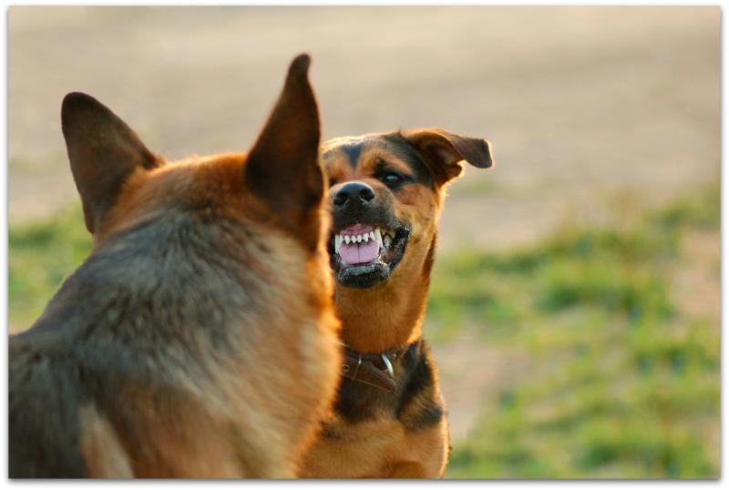 Agg dog2
