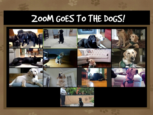 ZOOM DOGS (1)