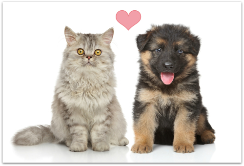 Puppy and kitten pic